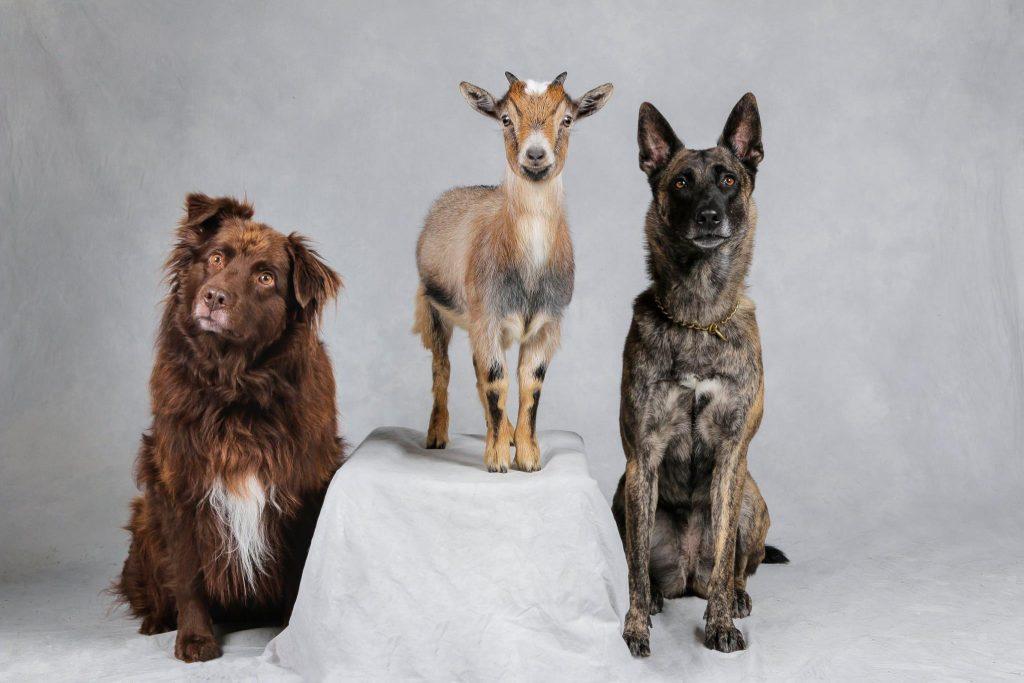 hundar i halmstad